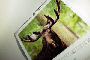 elch kalender