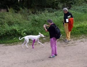 documenta hund